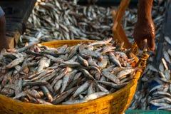 Les pêcheurs portent des poissons dans un bassin en plastique Dock de pêche dans l'Inde du sud photos stock