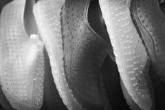 Les paires colorées de plein cadre de l'eau sans lacets chausse le fond à b photographie stock