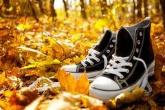 Les paires d'espadrilles sur les feuilles tombées en automne se garent Images libres de droits