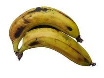 Les paires de la banane portent des fruits d'isolement tenu sur le fond blanc Photo libre de droits