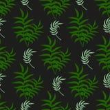 Les palmettes tropicales de vert d'été de paume de modèle noircissent le fond Photographie stock