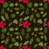 Les palmettes tropicales de vert d'été de paume de modèle noircissent le fond Photos stock