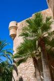 Les palmiers d'EL Palmeral d'Elche Elx Alicante se garent et Altamira Pala photos stock