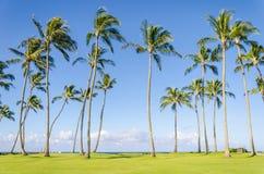 Les palmiers de noix de coco sur le Poipu échouent en Hawaï photographie stock libre de droits