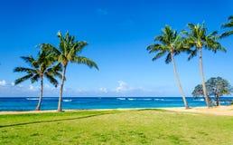 Les palmiers de noix de coco sur le Poipu arénacé échouent en Hawaï images libres de droits