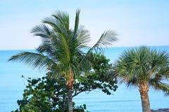Les palmiers encadrent la vue de l'Océan Atlantique Photographie stock