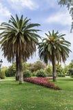 Les palmiers et les fleurs dans le Ciutadella se garent, Barcelone Photographie stock