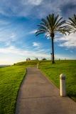 Les palmiers et le chemin au sommet se garent, en colline de signal Photos libres de droits