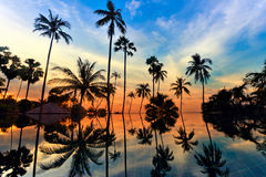 Les palmiers grands de noix de coco au ciel crépusculaire se sont reflétés dans l'eau Photos stock