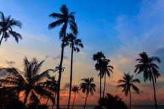 Les palmiers grands de noix de coco au ciel crépusculaire se sont reflétés dans l'eau Photo libre de droits
