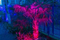 Les palmiers rougeoient avec les lampes au néon image libre de droits