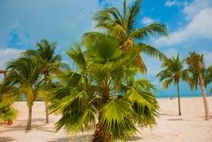 Les palmiers s'approchent de la plage de paradis cancun Plage du Mexique tropicale dans les Caraïbe Photographie stock