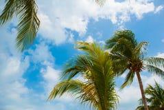 Les palmiers s'approchent de la plage de paradis cancun Plage du Mexique tropicale dans les Caraïbe Image stock