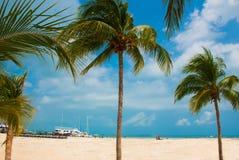 Les palmiers s'approchent de la plage de paradis cancun Plage du Mexique tropicale dans les Caraïbe Images libres de droits