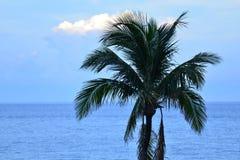 Les palmiers signalent que vous Re de ` près d'une vie tropicale d'île Photographie stock