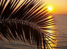 Les palmiers silhouettent au coucher du soleil Photographie stock