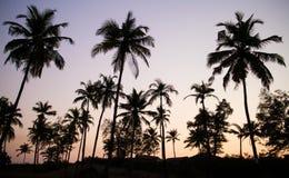 Les palmiers silhouettent au coucher du soleil Photo stock