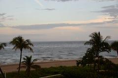 Les palmiers sont la carte de signature pour les plages fabuleuses dans le monde entier Image stock