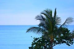 Les palmiers sont une agrafe de la vie d'île Image libre de droits