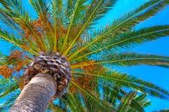 Les palmiers tropicaux s'approchent de la mer bleue Vacances d'été exotiques Images stock
