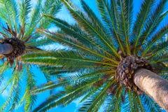 Les palmiers tropicaux s'approchent de la mer bleue Vacances d'été exotiques Photographie stock