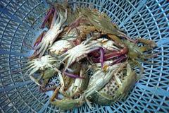 Les paniers contenant le crabe frais ont attrapé par des pêcheurs, en vente Photographie stock libre de droits