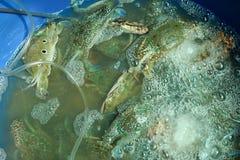 Les paniers contenant le crabe frais ont attrapé par des pêcheurs, en vente Image stock