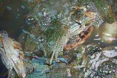 Les paniers contenant le crabe frais ont attrapé par des pêcheurs, en vente Image libre de droits