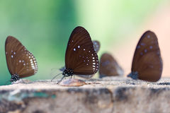 Les papillons Photos stock