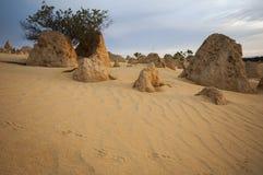 Les pas dans le sable dans les sommets abandonnent Photo libre de droits