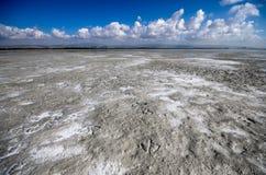 Les pas du flamant Lac de sel de Limassol Image libre de droits