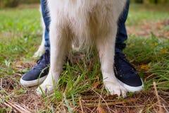 Les pattes du golden retriever et les bottes du ` s de propriétaire sur l'herbe verte Images libres de droits