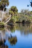 Les paumes de chou se reflètent en rivière de Myakka dans FL Image stock