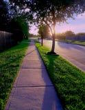 les paumes de coucher du soleil sucrent la promenade de Texas Houston de terre photo libre de droits