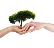 Les paumes et l'arbre Images libres de droits