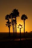 les paumes ont silhouetté le coucher du soleil photo stock