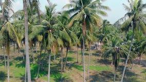 Les paumes tropicales avec de longues feuilles balancent en vent par temps chaud clips vidéos