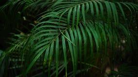 Les paumes vertes laisse humide après pluie forte dans la jungle banque de vidéos