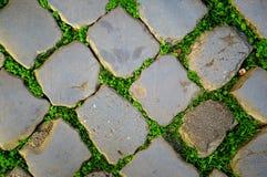 Les pavés ronds gris des pavés, entre eux élève de jeunes pousses vertes d'herbe photo stock