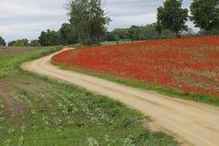 Les pavots de floraison proches de route Photographie stock libre de droits