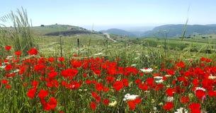 Les pavots de printemps rouge mettent en place et la vue de la Galilée à l'arrière-plan, Israël Photos libres de droits