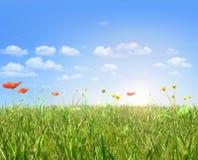 Les pavots et le pissenlit mettent en place, ciel bleu et soleil Photos libres de droits