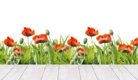 Les pavots rouges encadrent et la terrasse en bois blanche, d'isolement sur le blanc Photographie stock libre de droits