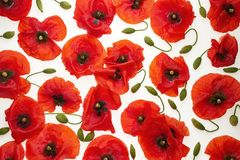Les pavots rouges sur le fond blanc - wallpaper, fond images stock