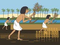 Les paysans égyptiens antiques moissonnent sur la bande dessinée de banque du Nil illustration de vecteur