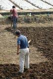 Les paysans chinois labourent le champ Photos stock