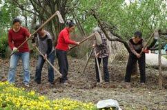 Les paysans chinois labourent le champ Images libres de droits