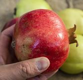 Les peintures de grenade, photos de grenade organique naturelle portent des fruits, Image stock