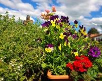 Les pensées et le ressort coloré fleurit sur le balcon Photos libres de droits