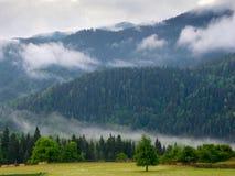 Les pentes de montagne aménagent en parc avec des sapins dans le brouillard Photos stock